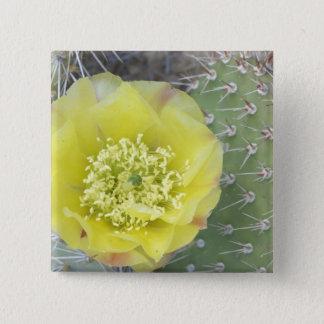 USA, Utah, Canyonlands, NP, Wüsten-Kaktusfeige Quadratischer Button 5,1 Cm
