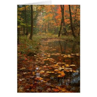 USA, Virginia, Herbst im Douthat Staats-Park Karte