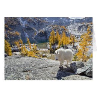 USA, WA, alpine See-Wildnis-Verzauberungen Karte