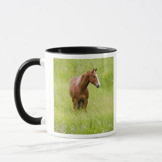 USA, Washington, Pferdeim Frühjahr Feld, Tasse