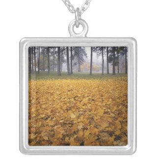 USA, Washington, Spokane, Manito Park, Herbst Versilberte Kette