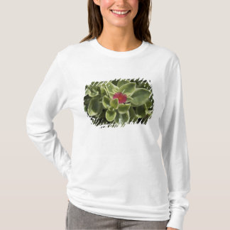 USA, Washington, Woodinville, Sedum Blume T-Shirt