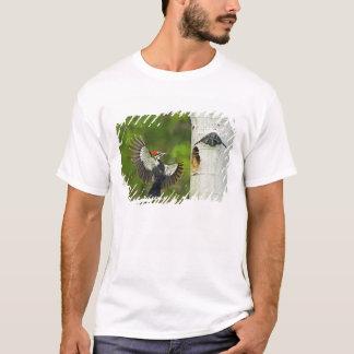 USA, Washington, Yakima. Mann gefaltet T-Shirt