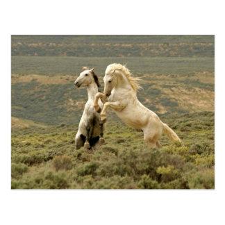 USA, Wyoming, Carbon County. Zwei wild Postkarte