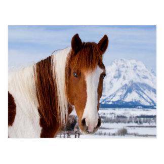 USA, Wyoming, großartiger Teton Nationalpark 3 Postkarte