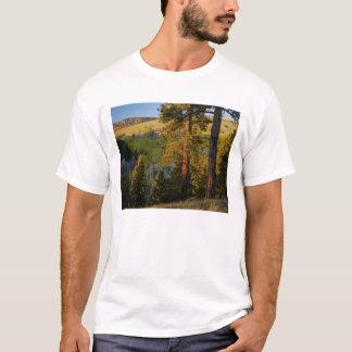 UTAH. Ponderosa Kiefern u. Espe, Herbst. T-Shirt