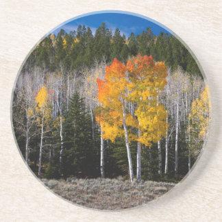 Utah, USA. Aspen-Bäume (Populus Tremuloides) 2 Untersetzer