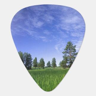 UTAH. USA. Ponderosa Kiefern Pinus ponderosa) u. Plektrum