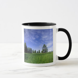 UTAH. USA. Ponderosa Kiefern Pinus ponderosa) u. Tasse