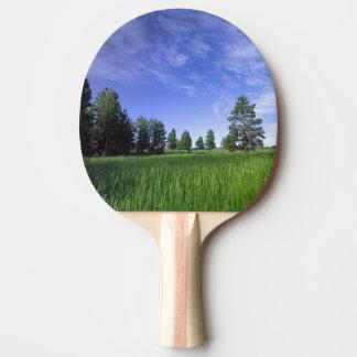 UTAH. USA. Ponderosa Kiefern Pinus ponderosa) u. Tischtennis Schläger