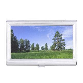 UTAH. USA. Ponderosa Kiefern Pinus ponderosa) u. Visitenkarten Dose