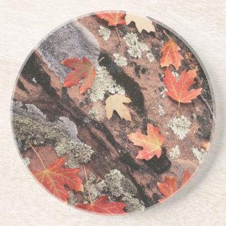 Utah, Zion Nationalpark, Muster des Herbstes Getränkeuntersetzer