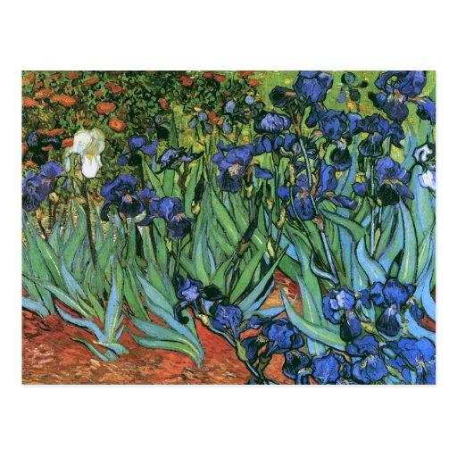 Van Gogh Irises (F608) Vintage feine Kunst Postkarte