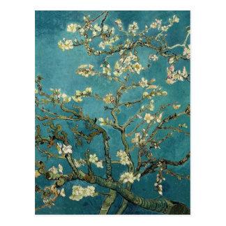 Van- Goghmandel-Niederlassungen in der Blüte Postkarte