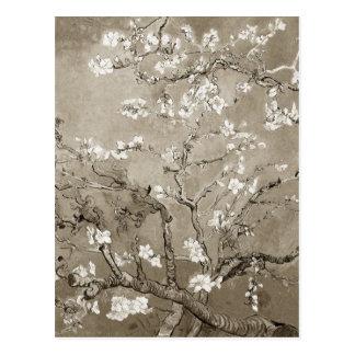 Van- Goghmandel-Niederlassungen in der Blüte - Postkarten
