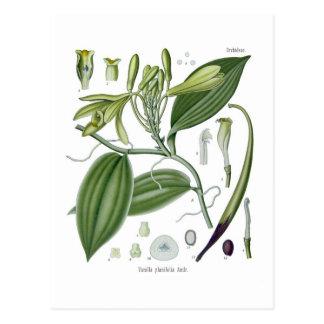 Vanille planifolia postkarte