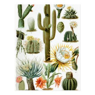Various_Cactaceae Postkarte