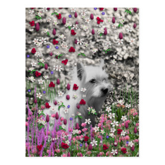 Veilchen in den Blumen - weißer Westie Hund Postkarte