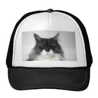 verärgerte Katze Kappen
