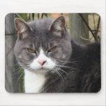 verärgerte Katze mousepads