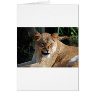 Verärgerte Löwin Karte