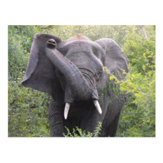 Verärgerter Elefant Postkarte