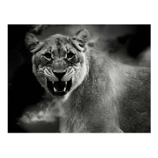 Verärgerter Löwe in Schwarzweiss Postkarte