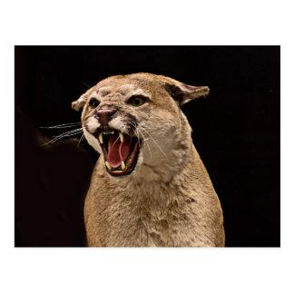 Verärgerter Puma Postkarte