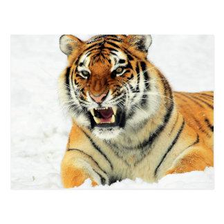 Verärgerter Tiger, der im Schnee liegt Postkarte