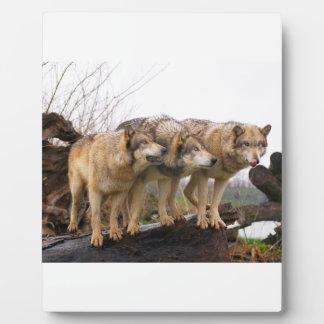 Verärgerter Wolfsrudel Fotoplatte