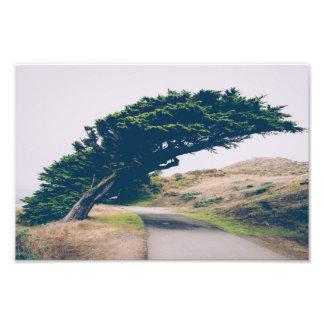 Verbiegender KüstenFoto-Druck des baum-| Kunstfoto