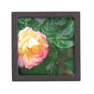 Verblassenherbst-Rose Schachtel
