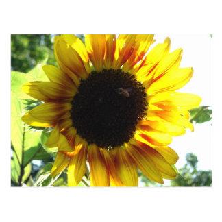 Verbreiten Sie einen wenig Sonnenschein!! Postkarte