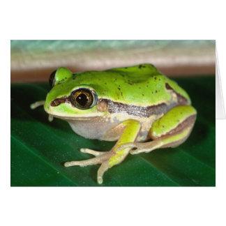 Verdecktes Treefrog, Smilisca baudini, gebürtig zu Karte