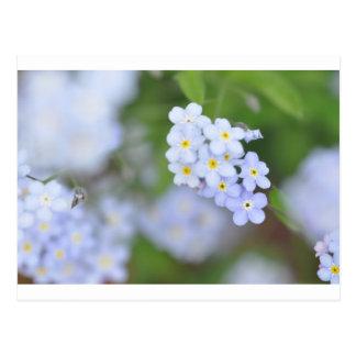 Vergessen Sie mich nicht Blumen Postkarte