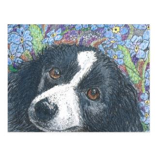 Vergessen Sie mich nicht Border-Colliehund Postkarte