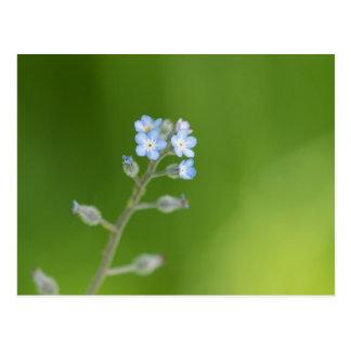 Vergissmeinnicht-Blumen Postkarten