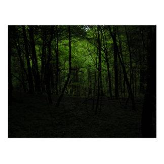Verlassener dunkler Wald Postkarte