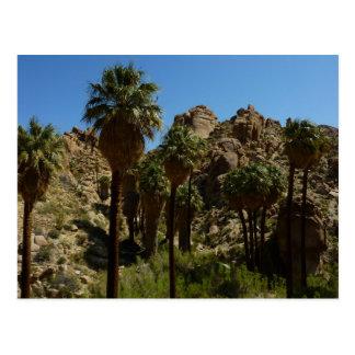 Verlorene Palmen-Oase I am Postkarte