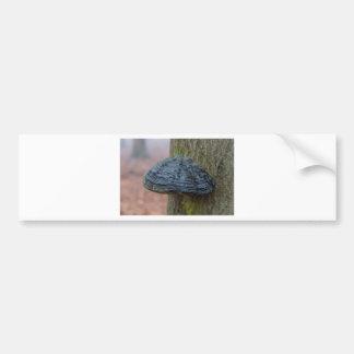 Vermehren Sie sich auf einen Baumstamm im Wald Autoaufkleber