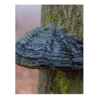 Vermehren Sie sich auf einen Baumstamm im Wald Postkarte