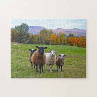 Vermont-Schafe im Herbst Puzzle