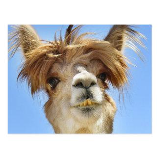 Verrücktes Haar-Alpaka Postkarte