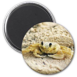 Versanden Sie Krabbe, Curaçao, karibische Inseln, Runder Magnet 5,1 Cm