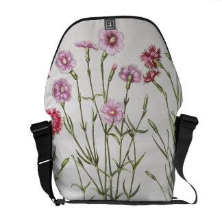 Verschiedene Vielzahl von Dianthus, vom 'Hortus Ey Kurier Taschen