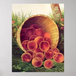 Verschüttete Pfirsiche Posterdruck