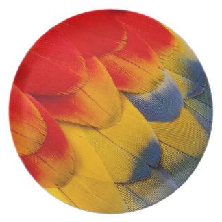 Versieht Scharlachrot Macaw-Nahaufnahme mit Federn Melaminteller