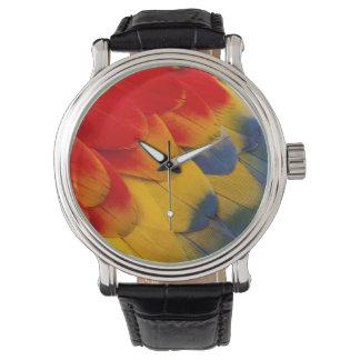 Versieht Scharlachrot Macaw-Nahaufnahme mit Federn Uhr