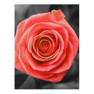 Versprechen-Rose Postkarte