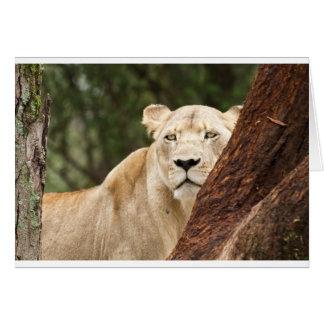 Versteckende Löwin Karte